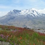 Mt. St. Helens and wildflowers