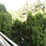 Вид с моего балкона.