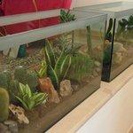 'teche' piante grasse nella hall
