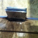 Pic 4 - The inside area of the shower exhibited substantial amounts of mold