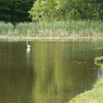 Photo of Wild Duck Campground & RV Park, Inc