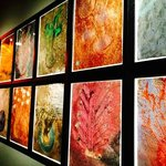 Sketches that show part of Chihuly's process as he prepares sketches and preliminary work on pap