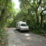 shaded tree lined campsite