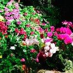 incredible floral beauty at Butchart gardens