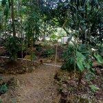 Yaxche Jungle Camp surroundins