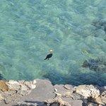 Vista alle 8 dalla ns terrazza : cormorano a pesca