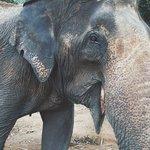 Experience feeding, training, and bathing these beautiful animals.
