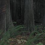 Wonderful old woodland paths