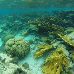 Beautiful undersea gardens