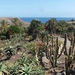 Veduta dal giardino dei cactus