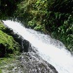 El Puhoma Orchid Reserve