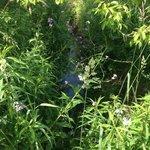 stream and wild flowers