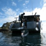 A great days diving in the Bay of Islands