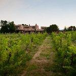 vineyard and inn