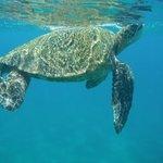 turtle encounter at Papaluau beach while snorkeling