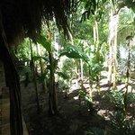 Outside our room, a veritable jungle.