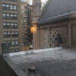 vista de la habitacion, tetrica, palomas muertas en el techo