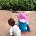 interesting reptile :-)