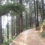 Calmness of forest