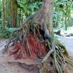 Unusual root system