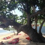 amazing tree on the beach