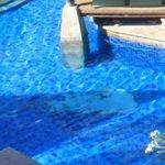 faience decollee dans la piscine