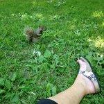 coucou l ecureuil