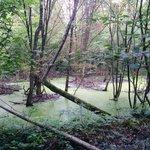 The swamp around the railway