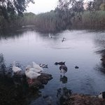 Natural Marshland Lake