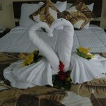 A swan-towel welcome