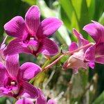 Nevis Botanical Garden - orchid gardens