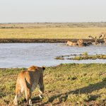 Lions and hyenas seen on Porini Lion Camp game drive