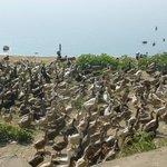 Ein Paradies für die Enten!