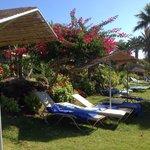More sun beds in garden area
