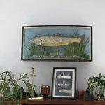 une truite pêchée dans le lac par Roy, pêcheur expert