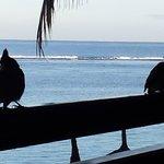 visiteurs sur la terrasse le matin