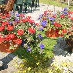 i fiori della signora Anna