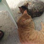 The island kittens