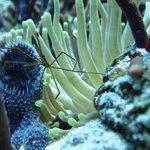 Diving with Aqua Safari