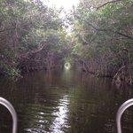 Trip through the mangroves