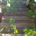 The rickety old, overgrown stairs to the waterside grass patch; a little property maintenance wo