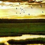 Rachel Carson Wildlife Refuge