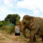 Walking the elephant