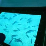 barco con vision submarina