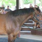 Hall of Champions Horse