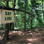 Sap line