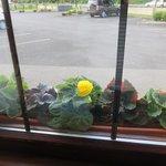 Cute flower box outside our window