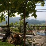 Local Vineyards from Breakfast Terrace