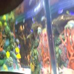 Fish tank by our table