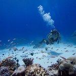 Peaceful, Restful Diving